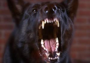 Dosar penal după ce o femeie a fost mușcată de câine
