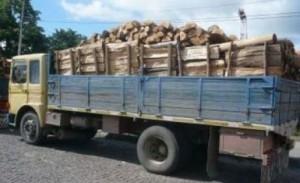 Hoţi de lemne, prinşi de poliţişti