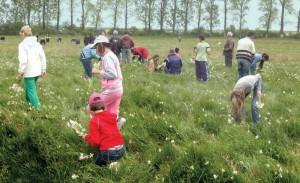 40 de ţigani din Racoş vindeau flori din Poiana Narciselor