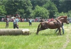 Festival ecvestru, cu ocazia Zilelor orașului Râșnov