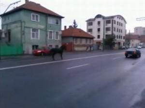 VIDEO Un cal scăpat din hățuri a sărbătorit și el deschiderea FOTE