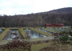 Fonduri europene pentru acvaculturi