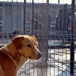 Locuri de muncă Brașov: Îngrijitor la azilul de câini