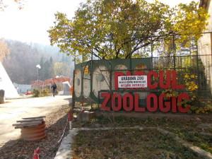 Licitații pentru amenajarea țarcurilor pentru zebre și tapiri, la Zoo Brașov