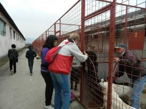Ziua animalelor fără stăpân, sărbătorită la Azilul de câini