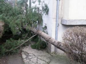 Vântul puternic a rupt un brad de 12 metri care a căzut pe faţada unui bloc