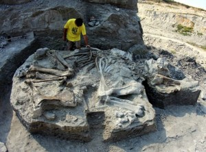 Strămoșul mamutului descoperit la Racoș, expus în Dino Parc la Râșnov