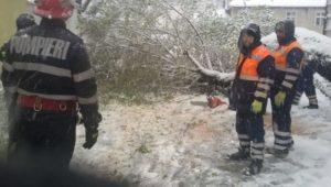 Zăpada a doborât mai mulți copaci pe linia de cale ferată și în Brașov