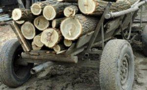 Prinşi în timp ce transportau cu căruţa lemne furate