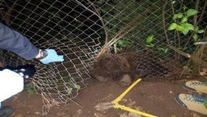 Ursuleț, salvat după de a rămas captiv într-un gard de sârmă (Foto și Video)