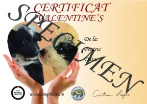 Ajuți cățeii de la adăpostul Victory și primești un certificat special de Ziua Îndrăgostiților