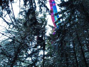 VIDEO Parapantist blocat la o înălțime de zece metri, într-un copac