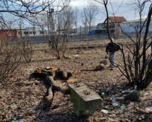 Au tăiat copacii din fața blocului, pentru lemne de foc (Foto)