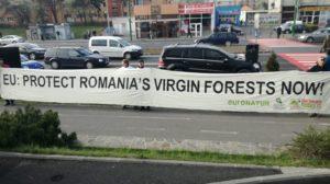 ONG-ul Agent Green protestează la Brașov împotriva exploatării forestiere