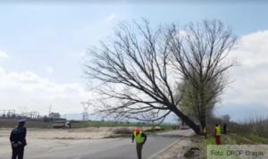 Circulație îngreunată pe DN73A, între Râșnov și Zărnești, din cauza copacilor periculoși