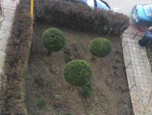 Cea mai frumoasă grădină din cartierul tău!