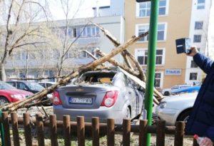 Un copac a căzut din senin în Parcul Tractorul. O personă rănită și două mașini avariate