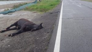 Cal accidentat mortal pe strada Hărmanului
