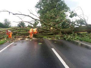 Copaci rupți și stâlpi dărâmați în Brașov din cauza vijeliei