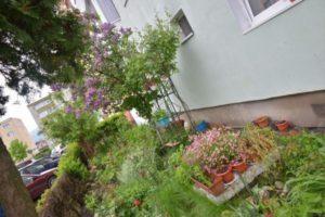Una dintre cele mai frumoase grădini din Brașov, premiată de primarul George Scripcaru (FOTO)