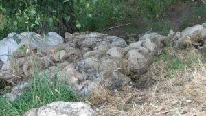 Zeci de piei de animale, abandonate pe un câmp din Brașov