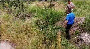 VIDEO Pui de urs salvat, după ce a căzut într-un canal colector la Victoria