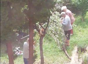 VIDEO Cu toporul la adunat de vișine