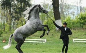 """Dosarul multinaţional """"Tradiţiile de creştere a cailor lipiţani"""" – depus pentru înscrierea în Lista UNESCO"""