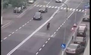 VIDEO Cal, printre mașini, la Făgăraș