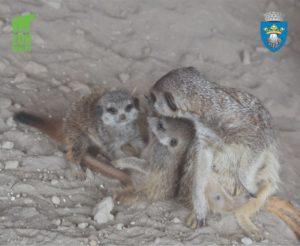 Trei locatari noi la Zoo Brașov