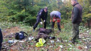 VIDEO Lupta contra cronometru pentru salvarea unui urs!