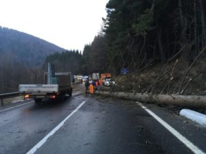 Copaci căzuţi pe DN1 şi DN73A