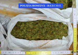 Un brașovean a primit 4 kilograme de cannabis, din străinătate! A fost arestat de polițiști!