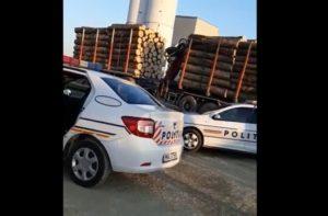 VIDEO Transport ilegal de lemne, la Zărnești! Reacția inedită a agentului de poliție!