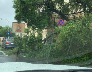 Copac căzut peste o mașină în Brașov