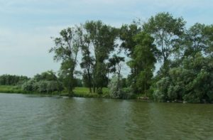 Îți dorești o vacanță de vis? Îți propunem plimbări în Delta Dunării, atât pe apă, cât și pe uscat