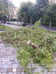 Pentru a evita accidentele provocate de prăbușirea arborilor, municipalitatea va tăia sau va toaleta mai mulți copaci