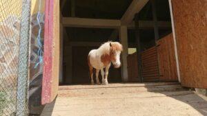 FOTO Caii și poneii de la Zoo Brașov, folosiți pentru hipoterapia persoanelor cu autism