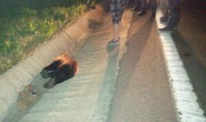 Pui de urs, lovit mortal pe DN1