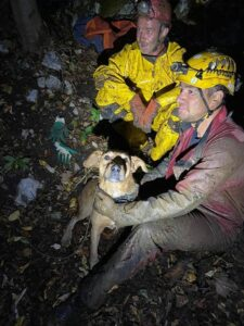 Câine rămas captiv în peștera Studenți de lângă Râșnov, salvat de salvamontiști și speologi
