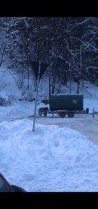 Urs capturat, în urmă cu scurt timp, la Predeal