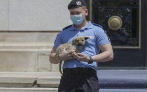 Poliția Animalelor a devenit operațională. Cruzimea asupra animalelor, pedepsită cu închisoarea