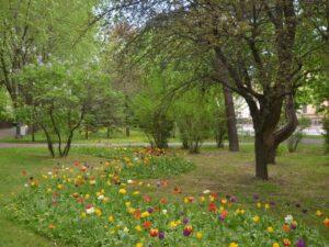 Accesul în parcurile și zonele verzi ale Brașovului se schimbă. Liber cu biciclete, hamace și câini ?
