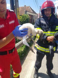 VIDEO Pui de barză rănit, salvat de pompieri