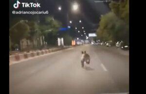 VIDEO Urs filmat pe Calea București!