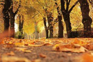 ANM: Temperaturile vor scădea brusc după 20 septembrie. Cum va fi vremea în următoarele patru săptămâni
